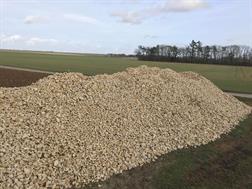 Kirpy Cailloux / Pierres de champs calcaire