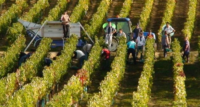 Service atelier de permanence viticole
